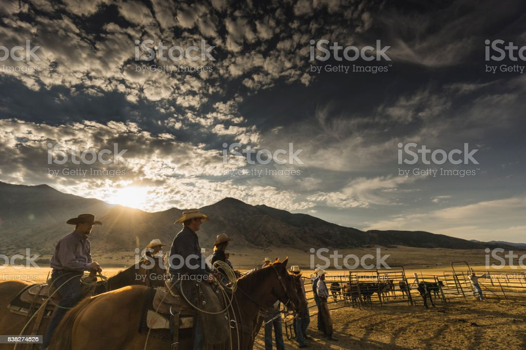 At sunrise, a group of cowboys and a cowgirl are ready to start their work day. Visible cattle in the background. stock photo