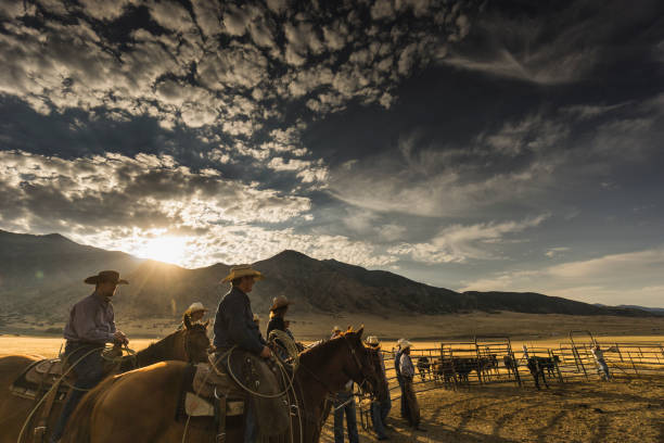 At sunrise, a group of cowboys and a cowgirl are ready to start their work day. Visible cattle in the background. Travel and real people photography. ranch stock pictures, royalty-free photos & images