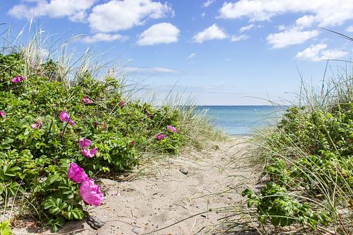 at the Baltic Sea
