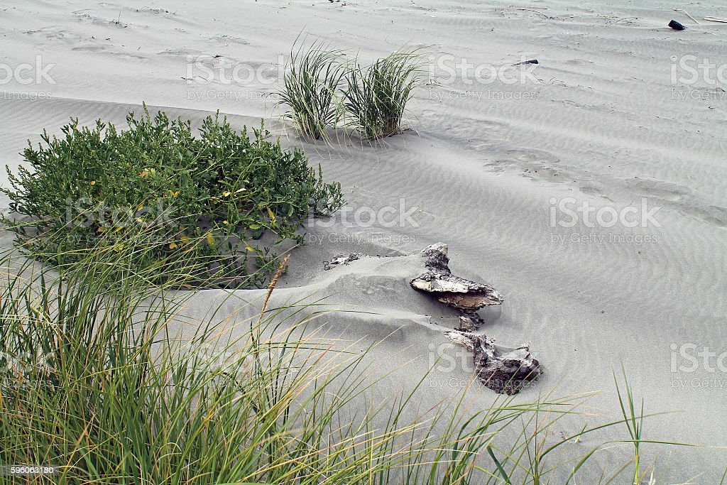 At the Beach - Sand, Dunes, and Beach Grass royalty-free stock photo