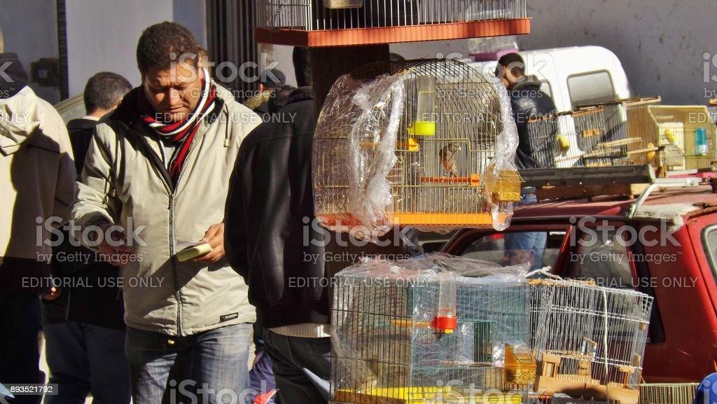 At the bird and animal market, in Tunis, Tunisia. stock photo