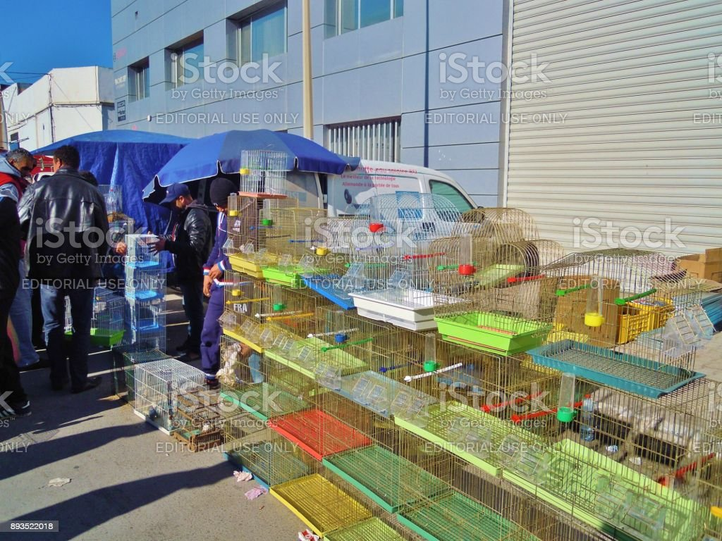 At the bird and animal market in Tunis, Tunisia. stock photo