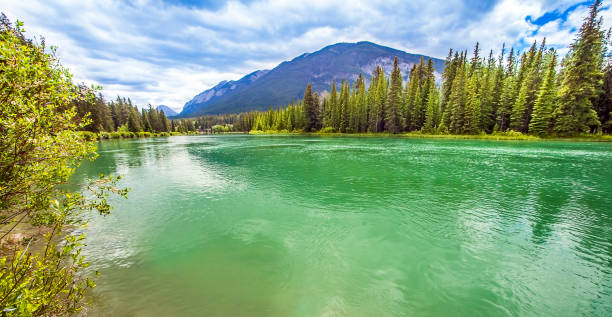 At the Bow River in Banff National Park Alberta Canada stock photo
