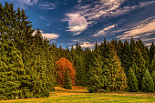 at the forest meadow in the Thuringian Forest\n\n