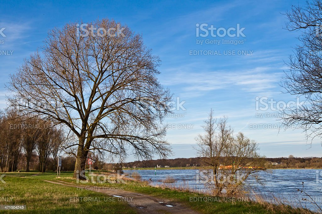 at the Rhine river in spring time stock photo