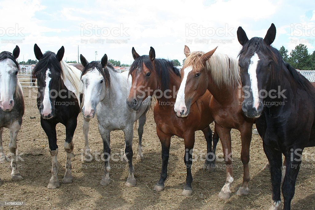 At the Rodeo royalty-free stock photo