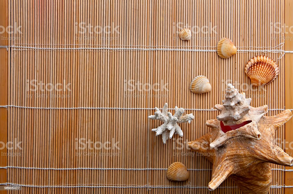At the SPA, Shells and Corals on Bamboo, with Copyspace royalty-free stock photo
