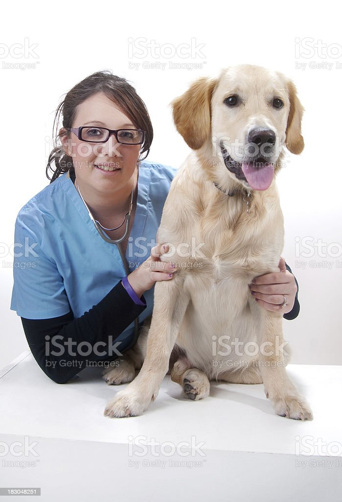 at the vets royalty-free stock photo