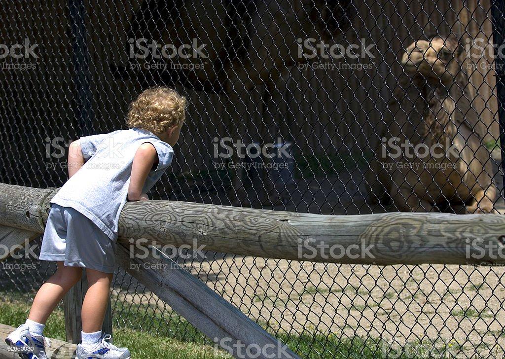 At the Zoo royalty-free stock photo