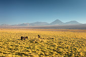 Atacama desert, Chile, Andes, South America. Beautiful view and landscape.
