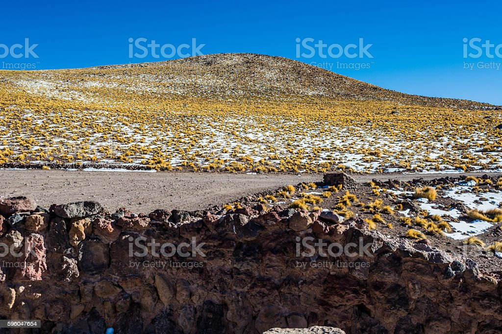 Atacama desert vegetation royalty-free stock photo