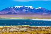 Salt and rock details, Atacama desert - Moon valley mountains