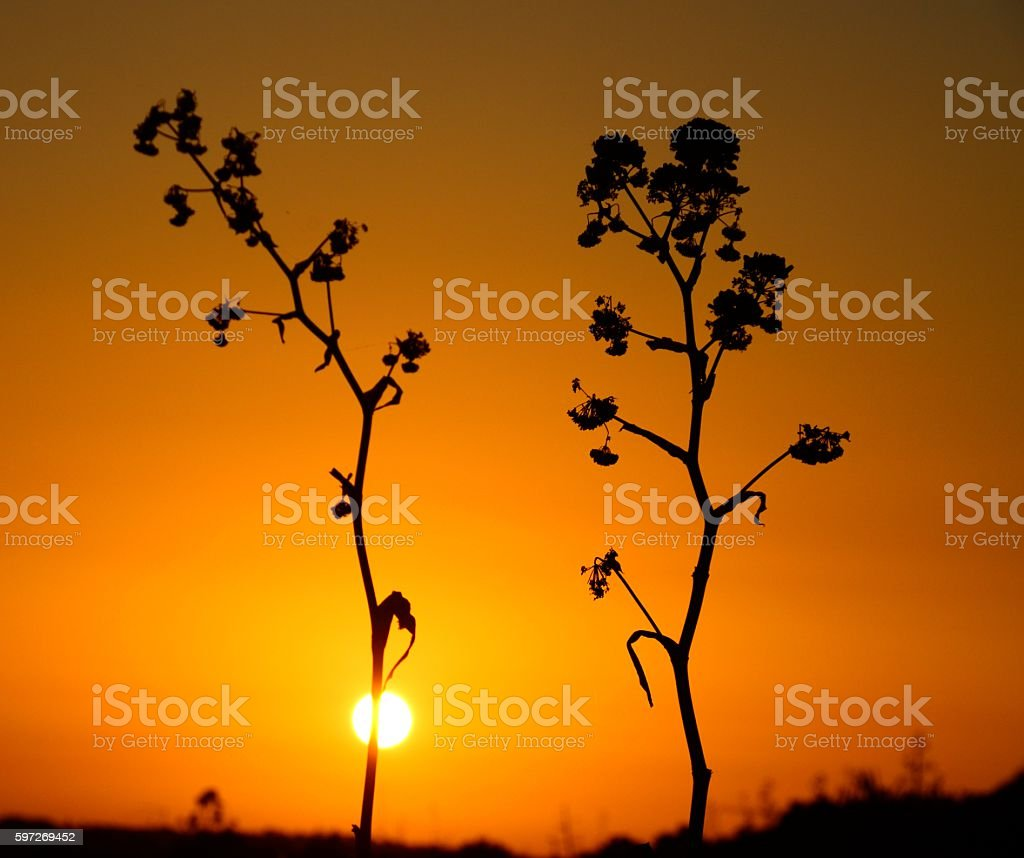 Atardecer en Ponta da Piedade, Lagos royalty-free stock photo
