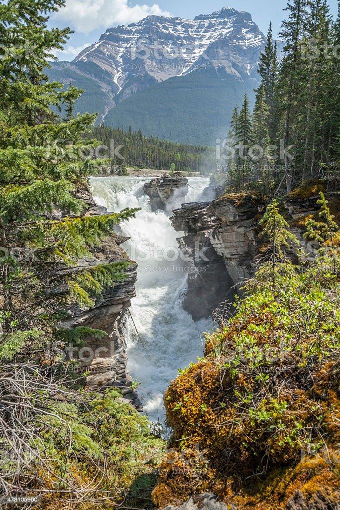 Athabasca Falls at Jasper National Park stock photo