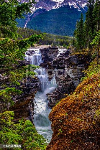 istock Athabasca Falls 1202615668