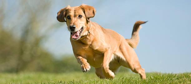 Athletic dog picture id140472770?b=1&k=6&m=140472770&s=612x612&w=0&h=ubibll3xatfvqxsql4fchvidhxij qim9zyyv1qn3zy=