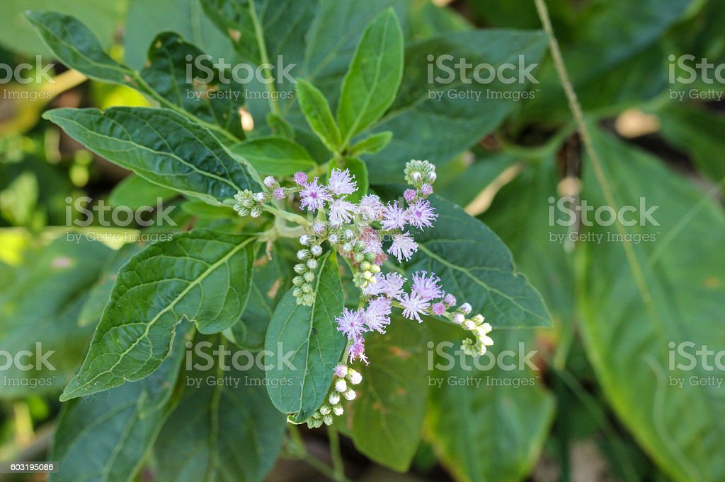 Atlantic Forest Flowers stock photo