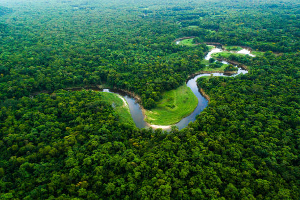 Atlantic Forest in Brazil, Mata Atlantica Wonderful aerial shots amazon river stock pictures, royalty-free photos & images
