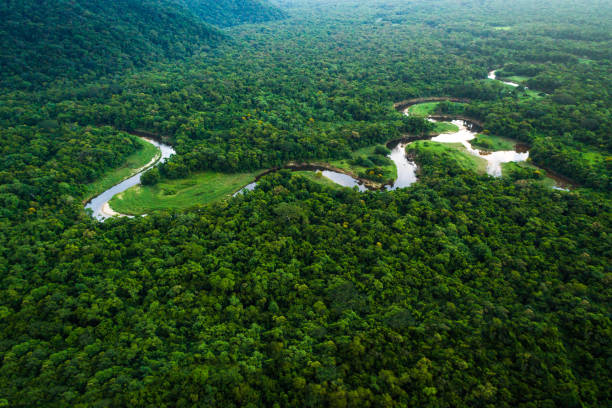 Atlantic Forest in Brazil, Mata Atlantica Wonderful aerial shots wildlife reserve stock pictures, royalty-free photos & images