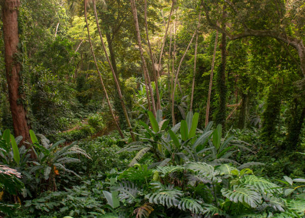 Atlantic Forest remnant stock photo