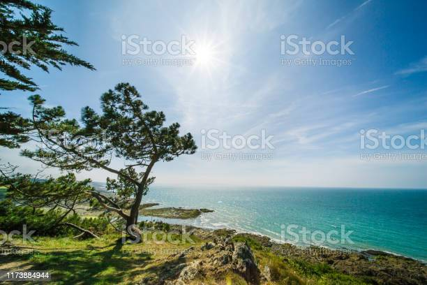 Photo of Atlantic Ocean Coastline with Turquoise Blue Water and Pine Trees on a Sunny Summer Day in Brittany France