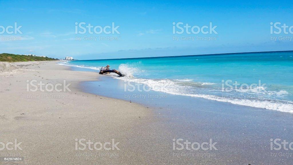 Atlantic Ocean – Driftwood in Ocean – Juno Beach stock photo