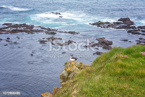 istock Atlantic puffin single bird on the stone against the ocean background 1072658490