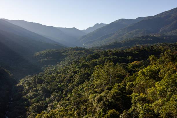 atlantisch regenwoud schoonheid - zuidoost stockfoto's en -beelden