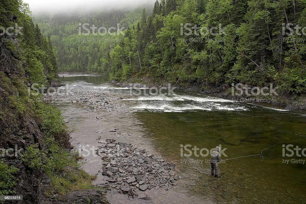Atlantic Salmon Fishing - York River royalty-free stock photo