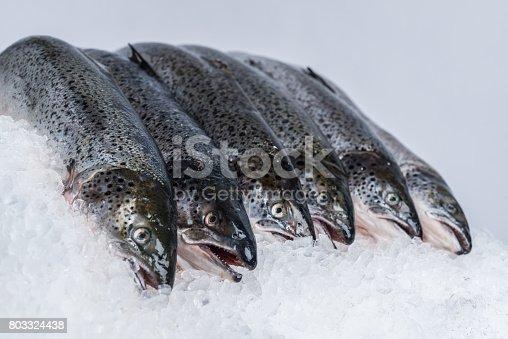Fresh Atlantic salmon on ice.