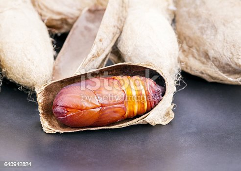 istock Atlas moth (Attacus atlas) chrysalis or pupa 643942824