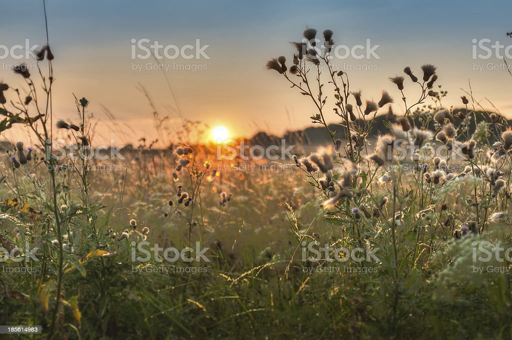atmosferic sunset over the field royalty-free stock photo