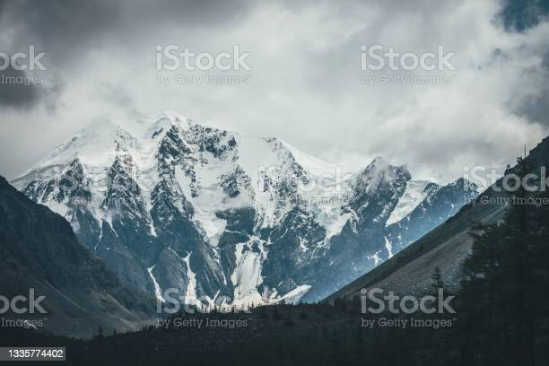 Photo of Atmospheric alpine landscape with forest silhouette against big glaciers on high mountains in low clouds. Awesome dramatic view through trees silhouettes to great snowy mountains in gray cloudy sky.