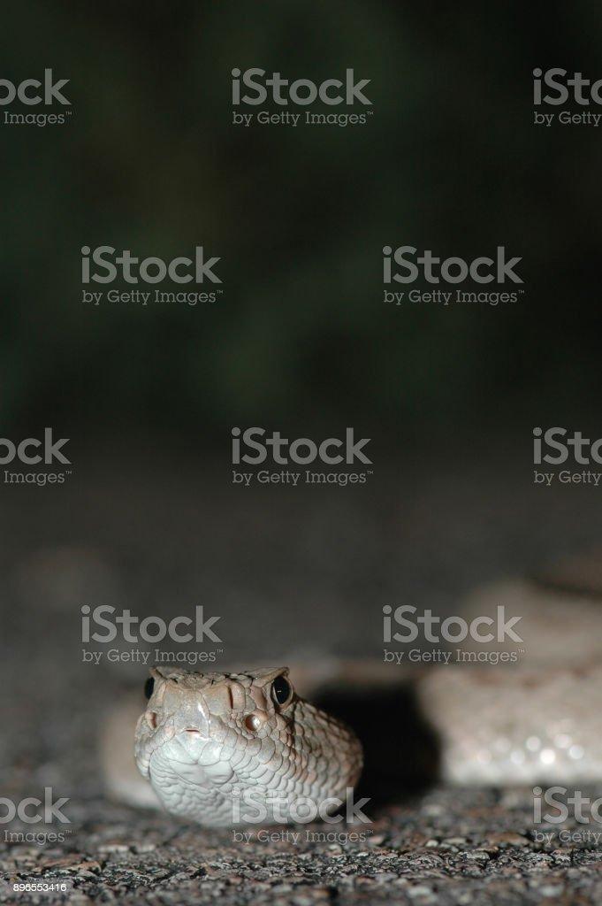 Atrox Portrait stock photo