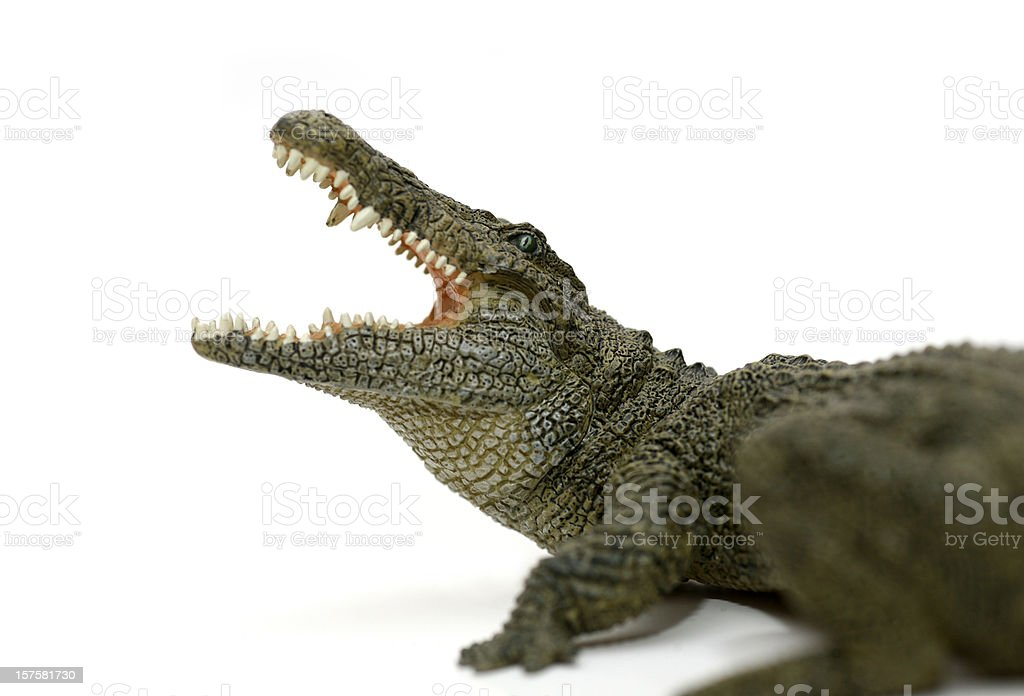 Attacking crocodile isolated on white stock photo