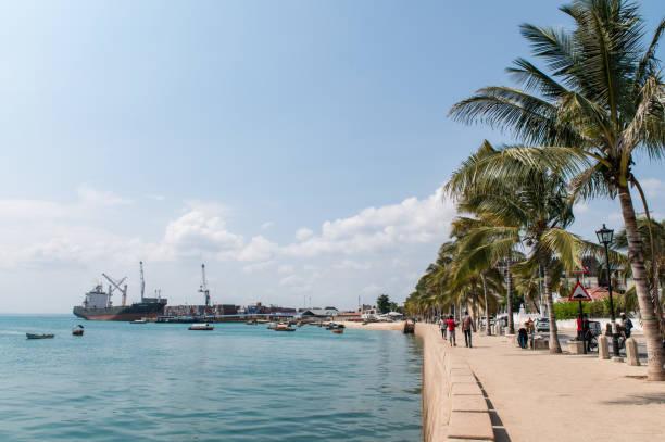 Attalea speciosa along the beach in Zanzibar stock photo