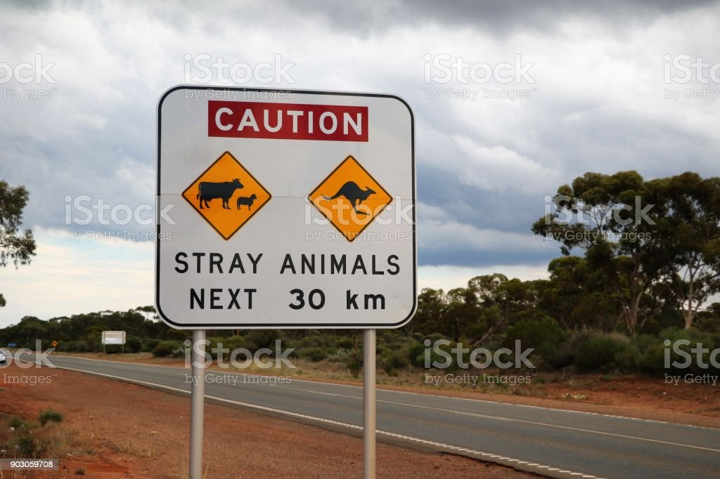Attention Kangaroo and Cows, Traffic Sign in Australia stock photo