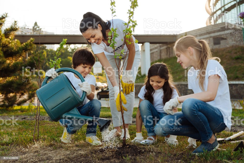 Attentive boy pouring new plant stock photo