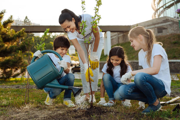 attentive boy pouring new plant - volunteer stock photos and pictures