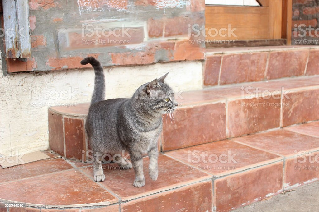 Attentive cat stock photo