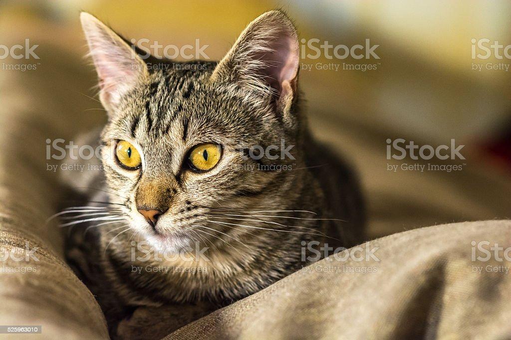 Attentive cat what happens - foto de stock