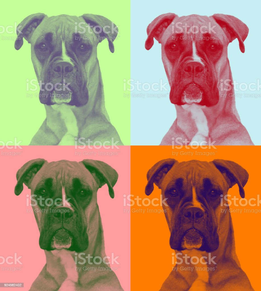 attentive dog in pop-art syle (two soft colors) stock photo