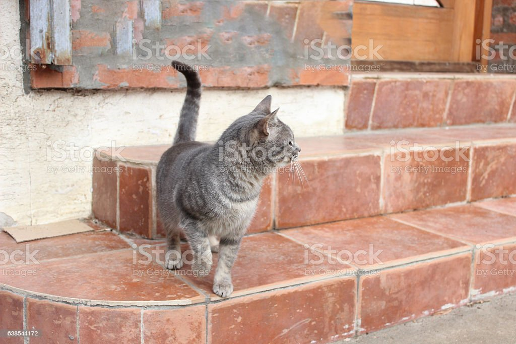Attentive grey cat stock photo