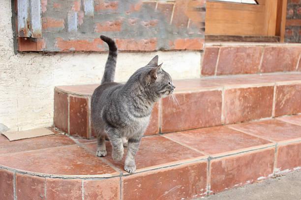 Attentive grey cat stock photo