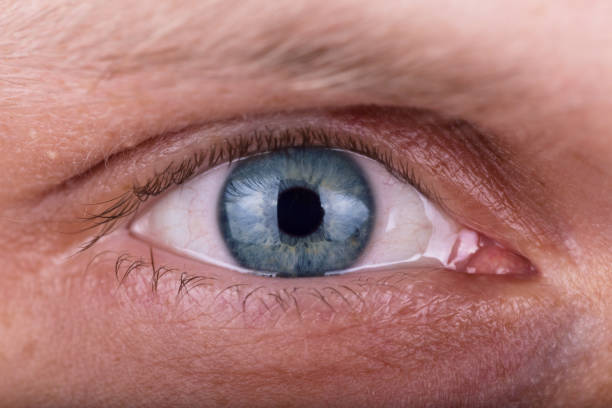 attentive penetrating male gaze. the man's eyes closeup - eyelid stock photos and pictures