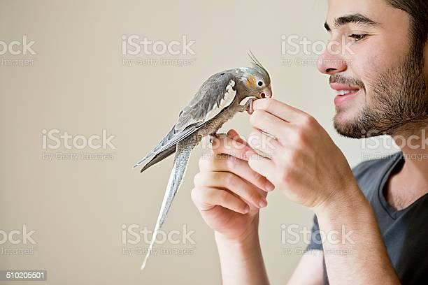 Attractive man playing with his parrot indoors picture id510205501?b=1&k=6&m=510205501&s=612x612&h=qjhjreyczldphjdttjeepytice9pdg6m4j vo7kloto=