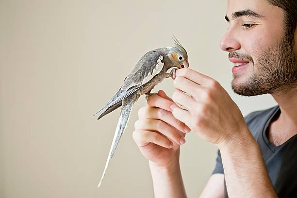 Attractive man playing with his parrot indoors Attractive man playing with his parrot indoors parrot stock pictures, royalty-free photos & images