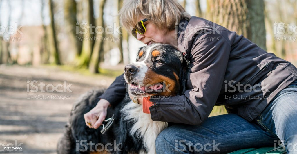 Attractive mature 50-years-old woman brushing the Bernese mountain...