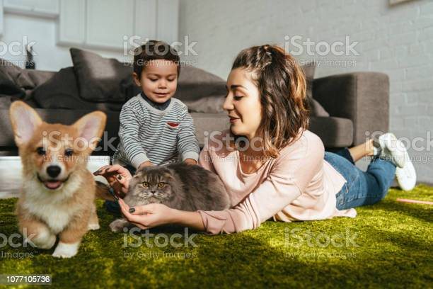 Attractive woman and little boy laying on floor with dog and cat in picture id1077105736?b=1&k=6&m=1077105736&s=612x612&h=ftkjwfvs q5tovwaixkv qa 5lsicfuw4q2h9 wg28u=