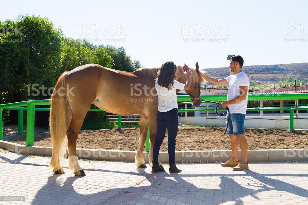 Attractive young couple grooming a brown female horse stock photo